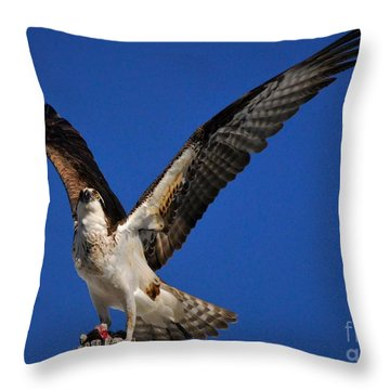 Pride Of The Sky's Throw Pillow