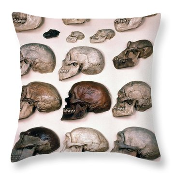 Primate Skulls Apes And Humans Throw Pillow by E R Degginger