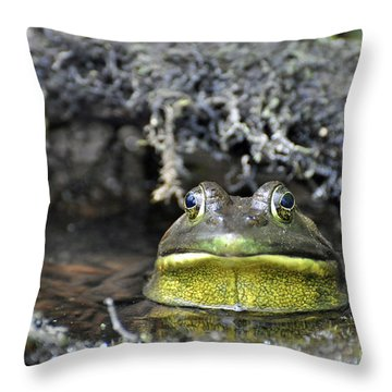 Throw Pillow featuring the photograph Bullfrog by Glenn Gordon