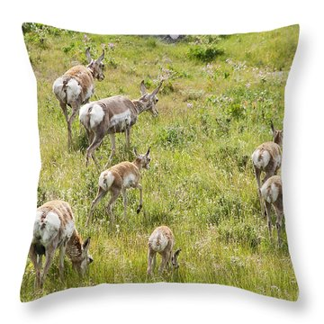 Pronghorn Antelope In Lamar Valley Throw Pillow by Belinda Greb