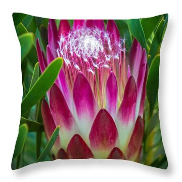 Protea In Pink Throw Pillow