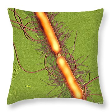 Proteus Vulgaris Bacteria Sem Throw Pillow