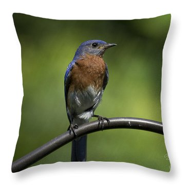 Proud Eastern Bluebird  Throw Pillow by Cris Hayes