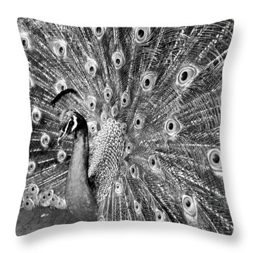 Proud Peacock Throw Pillow by Sean Davey
