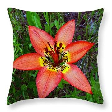 Prairie Lily - Lilium Philadelphicum Throw Pillow