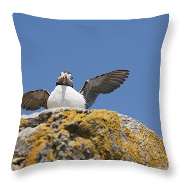 Puffed Up Puffin Throw Pillow by Anne Gilbert