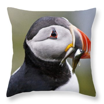 Puffin Throw Pillow by Heiko Koehrer-Wagner