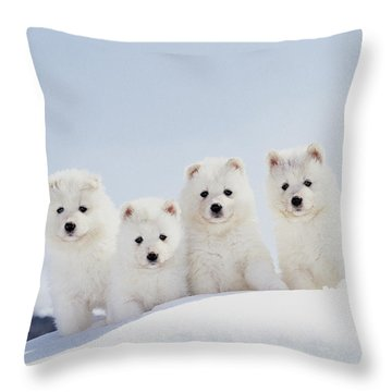 Puppies In Snow Throw Pillow by Mitsuyoshi  Tatematsu