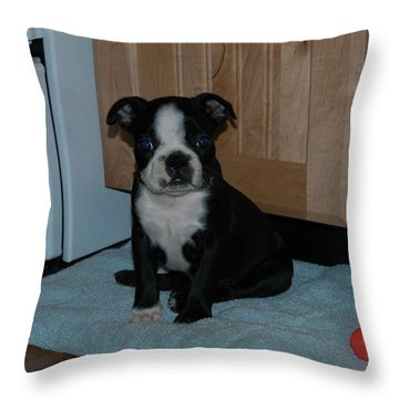 Throw Pillow featuring the photograph Puppy Boston Terrier And Toy by Donald Williams
