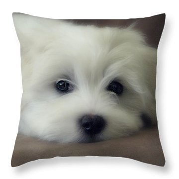 Puppy Eyes Throw Pillow by Melanie Lankford Photography
