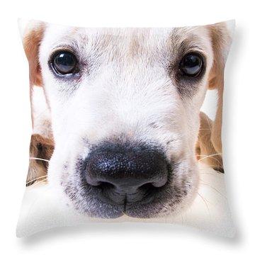 Puppy Face Throw Pillow by Diane Diederich