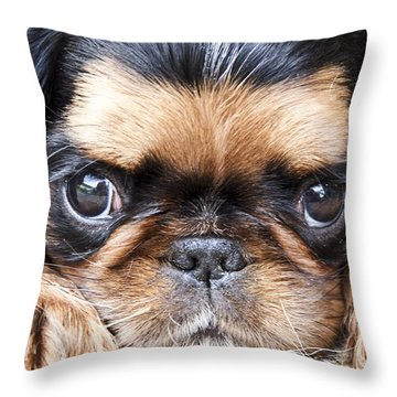 Puppy Love Throw Pillow by Jeannette Hunt