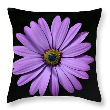 Purple African Daisy Throw Pillow