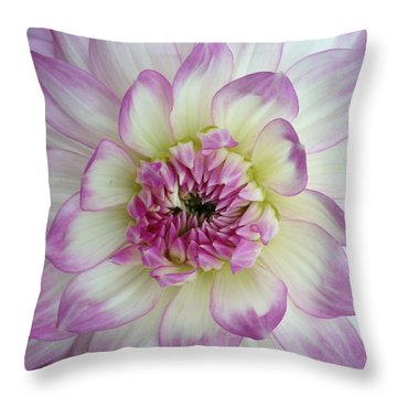 Throw Pillow featuring the photograph Purple And Cream Dahlia by Jeannie Rhode