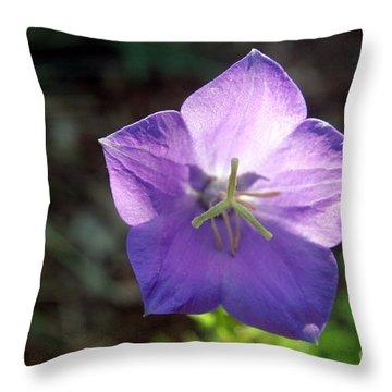 Purple Balloon Flower In Bloom Throw Pillow by Kenny Glotfelty