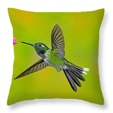 Purple-bibbed Whitetip Hummingbird Throw Pillow by Anthony Mercieca