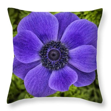 Purple Blue Anemone Throw Pillow by Jaki Miller
