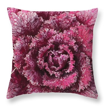 Purple Cabbage On A Frosty Morning Mill Throw Pillow by Stuart Westmorland