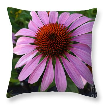 Purple Coneflower - Echinacea Throw Pillow