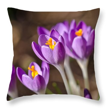 Purple Crocus Throw Pillow by Scott Carruthers