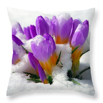 Purple Crocuses In The Snow Throw Pillow by Sharon Talson
