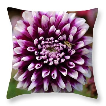 Purple Dahlia White Tips Throw Pillow