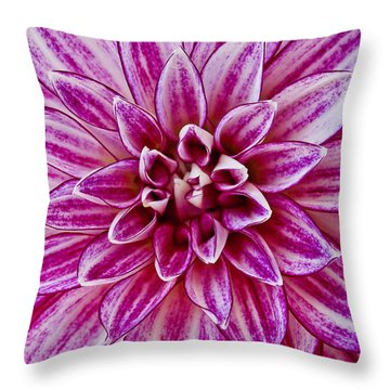 Purple Dahlia Throw Pillow