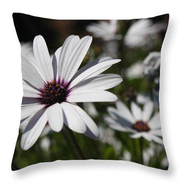 Purple Daisies 2 Throw Pillow