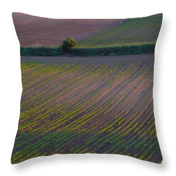 Throw Pillow featuring the photograph Purple Fields by Evelyn Tambour