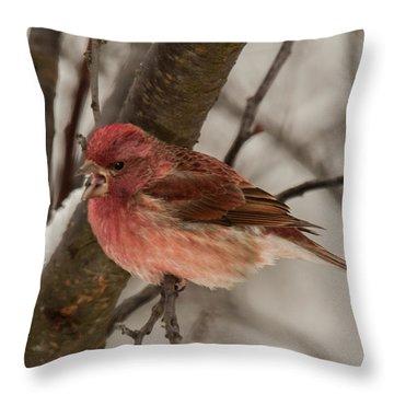 Throw Pillow featuring the photograph Purple Finch Bird Song by Lara Ellis
