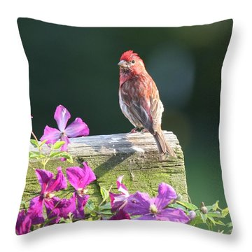 Purple Finch By Clematis Throw Pillow by Lucinda VanVleck