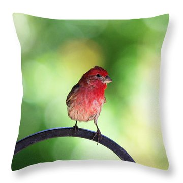 Throw Pillow featuring the photograph Purple Finch by Trina  Ansel
