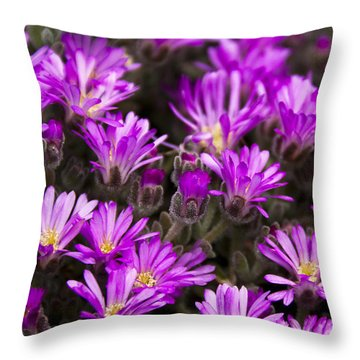 Throw Pillow featuring the photograph Purple Flowers by Raffaella Lunelli