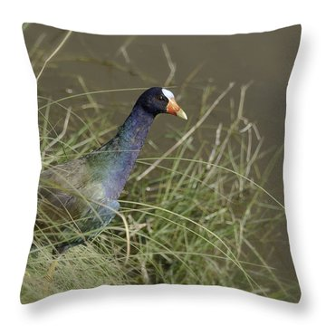 Throw Pillow featuring the photograph Purple Gallinule by Betty Depee