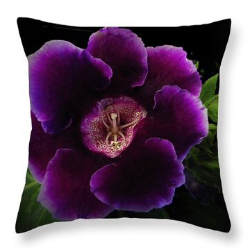 Purple Gloxinia   Throw Pillow by Judy  Johnson