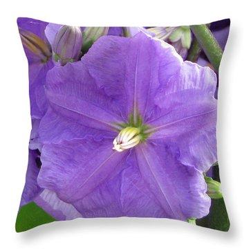Purple Heart Throw Pillow by Debi Singer