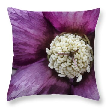 Throw Pillow featuring the photograph Purple Hellebore by Jaki Miller