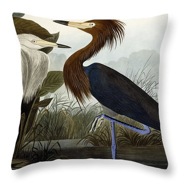 Purple Heron Throw Pillow by John James Audubon