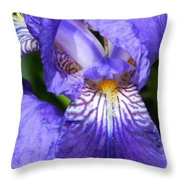 Purple Iris Throw Pillow by Chalet Roome-Rigdon
