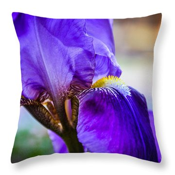 Purple Iris Throw Pillow by Cheryl McClure