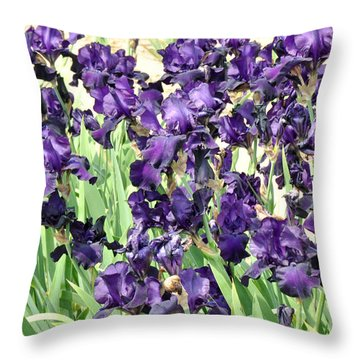 Purple Iris Throw Pillow by Diane Lent