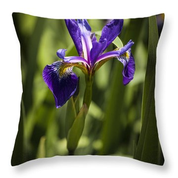 Throw Pillow featuring the photograph Purple Iris by Penny Lisowski