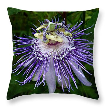 Purple Passionflower Throw Pillow by William Tanneberger