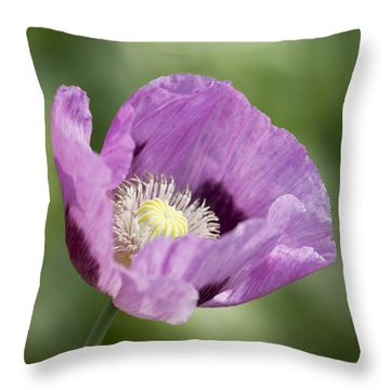 Purple Poppy Throw Pillow