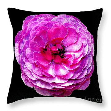 Purple Ranunculus Throw Pillow by Rose Santuci-Sofranko