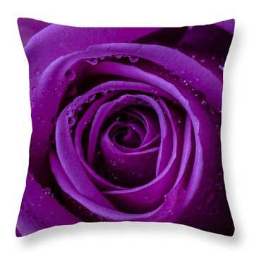 Purple Rose Close Up Throw Pillow by Garry Gay