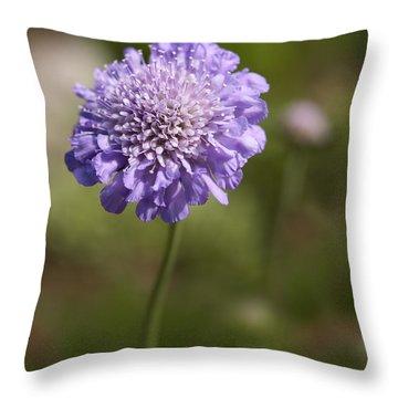 Purple Scabious Columbaria Throw Pillow by Tony Cordoza