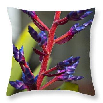 Purple Spike Bromeliad Throw Pillow by Sharon Cummings