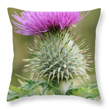 Purple Thistle Throw Pillow by Jeremy Voisey