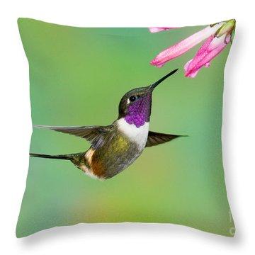 Purple-throated Woodstar Throw Pillow by Anthony Mercieca